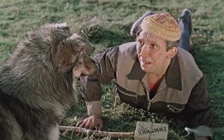 Пёс Барбос и необычный кросс (1961, HD)  Смотреть онлайн